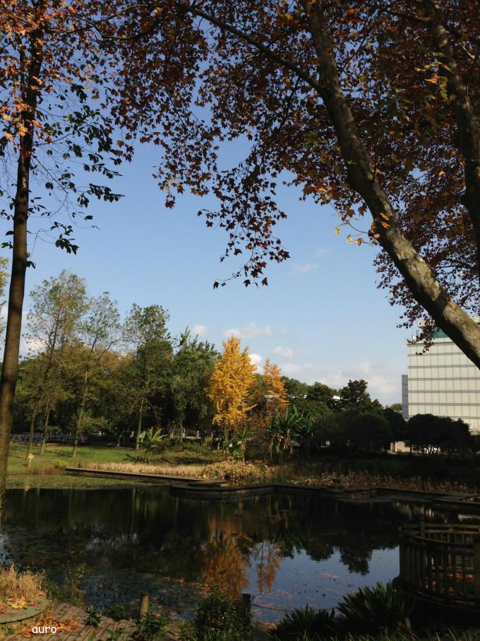 武汉植物园之春夏秋冬,一步一景.