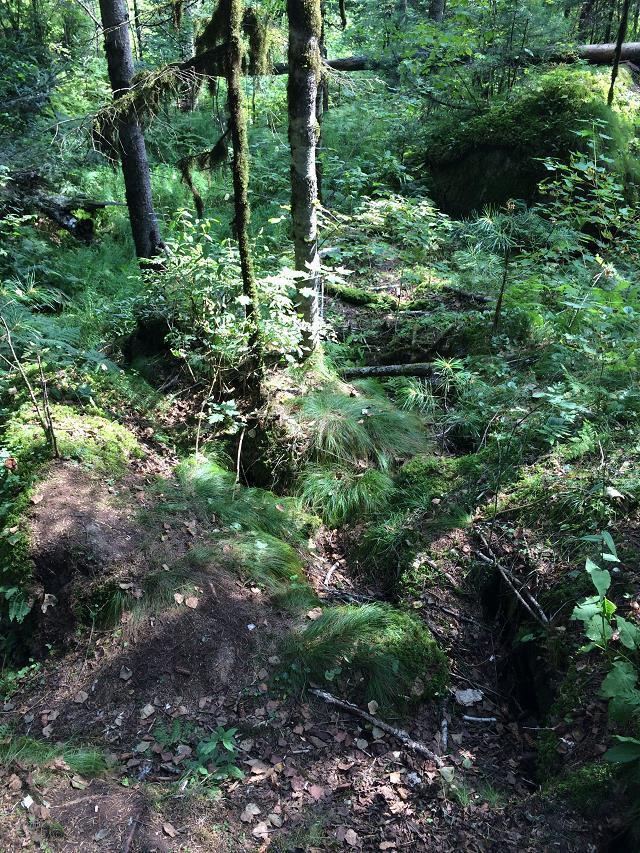 森林中有1390多种植物,是山野果,山野菜的丰产区.