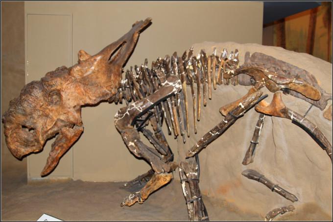曾漫游在古艾伯塔的动物的骨骼