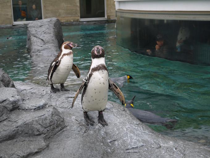 看了一部《新奇迹动物园