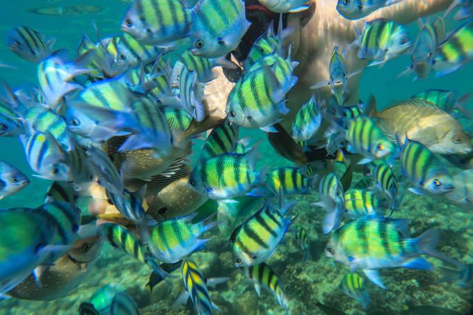 壁纸 海底 海底世界 海洋馆 水族馆 桌面 680_453
