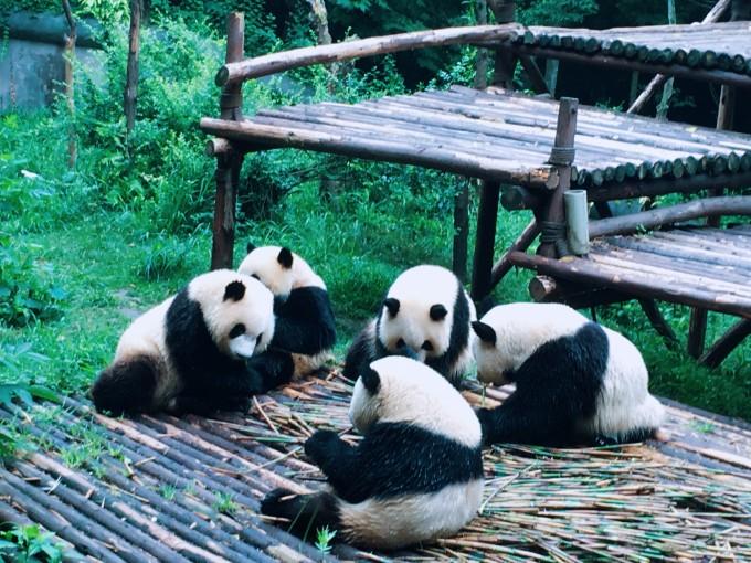 四川,不仅仅有大熊猫
