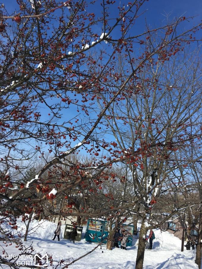 春节北海道 - 还原一个纯粹的世界