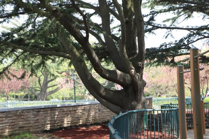 青岛中山公园动物园一日游