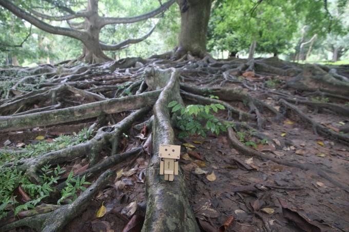树根雕刻蝙蝠图片大全